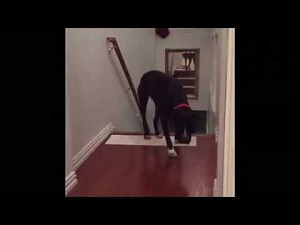 Jak pokonać strach - psi poradnik