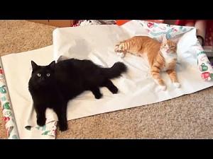 Co koty widzą w Święta...