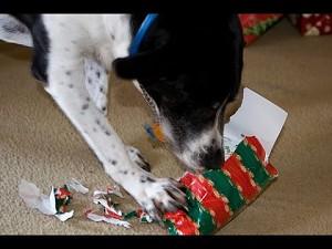 Psy odpakowują swoje prezenty || CFS