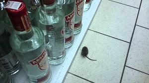 Mysz w markecie