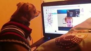 Psy na Skypie