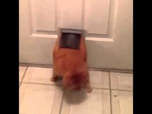 Garfield żyje