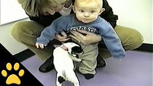 Psy kontra krocza