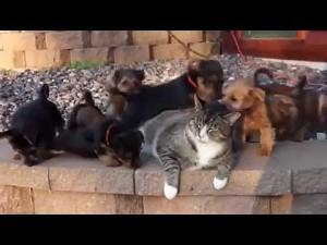 Kot stawia opór bestiom