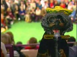 Skandaliczny Triumph na wystawie psów