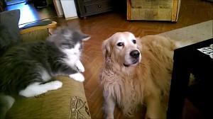 Podobno koty się nie słuchają