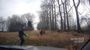 Czescy policjanci aresztują krowę