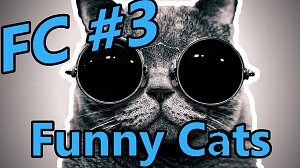 FC - Funny Cats #3