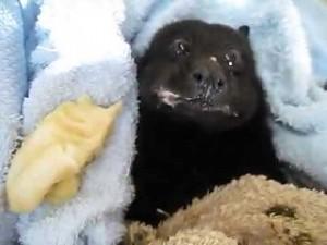A banana to ja wcinam tak!
