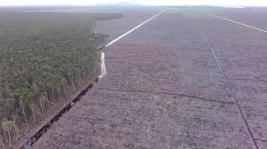 Greenpeace zamieścił film, pokazujący okropny proceder wycinki lasów w Indonezji!