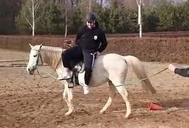 Koń zna się na ludziach