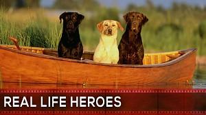 """""""Real life Heroes"""" - Wiara w dobro przywrócona - 31"""