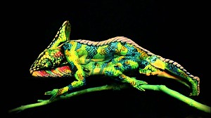 Niesamowity kameleon