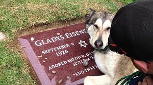 Pies rozpacza po śmierci bliskiej mu osoby