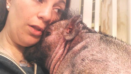 Opiekunka śpiewa niewidomej śwince