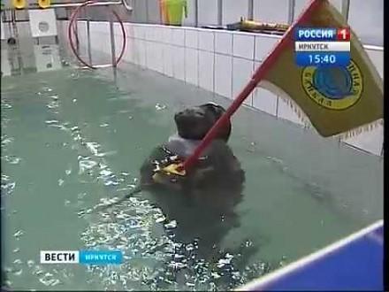 Rosyjskie foki bojowe. W czapkach i z pistoletami