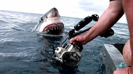 Bliskie spotkanie z żarłaczem białym