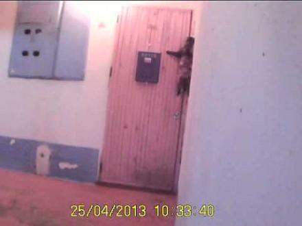Kot dzwoni dzwonkiem do drzwi