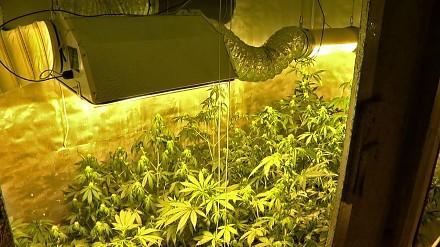 Uprawiał marihuanę w pomieszczeniu, do którego wchodziło się przez szafę