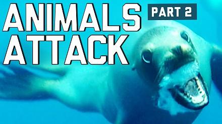 Kompilacja atakujących zwierząt #2