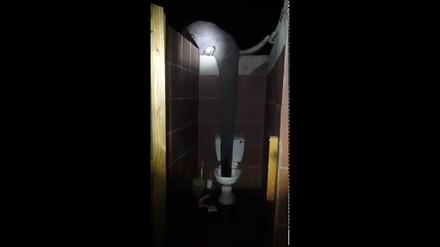 Tymczasem nocą w toalecie w Botswanie