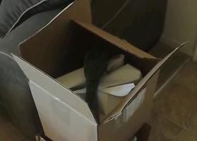 Papuga znalazła coś w pudełku