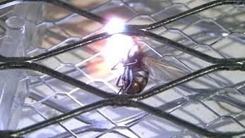 Unicestwianie muchy przy pomocy elektrycznej łapki w zwolnionym tempie