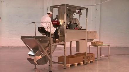 Maszyna, która obiera ponad 100 cebul na minutę