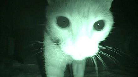 Purranormal Cativity, czyli sekretne, nocne życie kotów