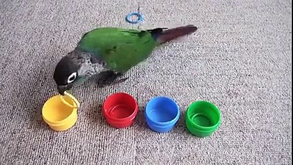 Papuga, która zna się na kolorach