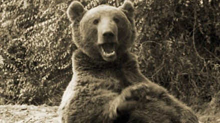 Prawdziwa historia o niedźwiedziu Wojtku