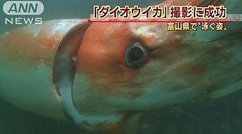Niezwykle rzadka, ogromna kałamarnica sfilmowana u wybrzeży Japonii