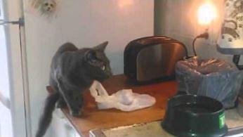 Kot-katapulta podjada sobie coś obok tostera