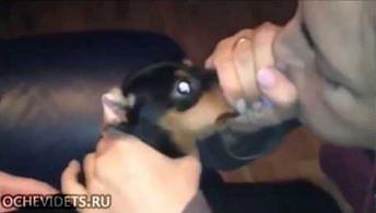 Czy da się nadmuchać psa?