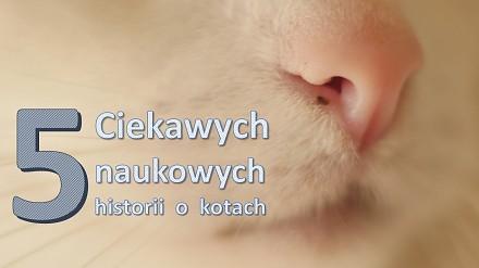 5 ciekawych, naukowych historii o kotach | Ranking Naukowego Bełkotu #11