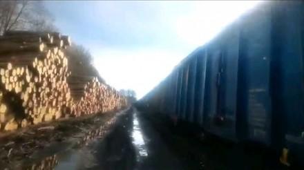 Zorganizowane grupy przestępcze z Lasów Państwowych dziennie kradły i wywoziły drewno za 20 mln euro