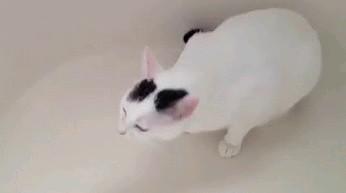 Kotka kichająca 51 razy