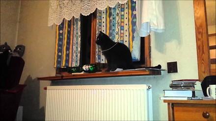 Dziki skok kota