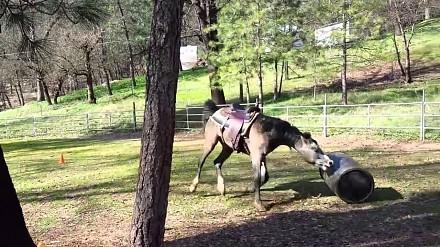 Koń znalazł sobie nową zabawę