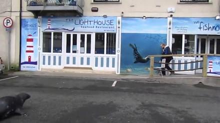 Żebrząca foka wychodzi na ulicę