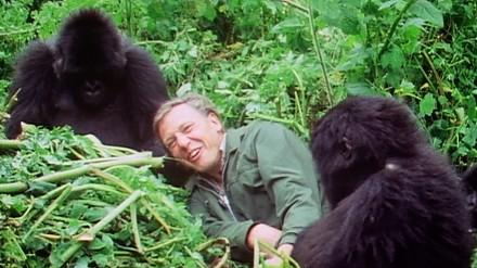 A tak BBC pamięta o zbliżających się 90 urodzinach Davida Attenborougha