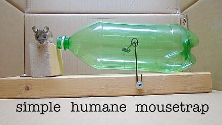 Humanitarna pułapka na myszy