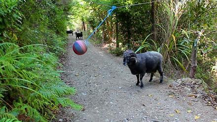 Co się stanie, gdy w lesie powiesisz zużyta piłkę?