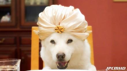 Japoński SoftBank i pies. Te reklamy to prawdziwa abstrakcja