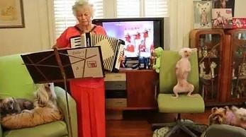 Tańczacy pies do muzyki z akordeonu