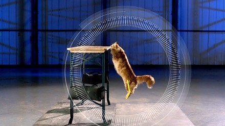 Koty kontra grawitacja
