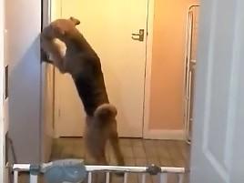 Co robi pies, gdy nikogo nie ma w domu?
