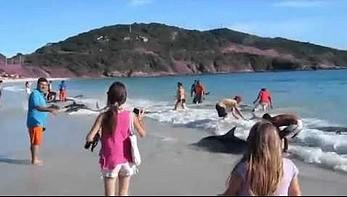 Błąd GPS wyprowadził je na plaże