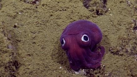 Pluszowy Cthulhu dostrzeżony na dnia oceanu