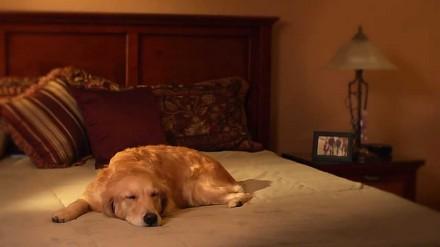 W czasie pracy tęsknisz za swoim psem? Oto rozwiązanie dla ciebie
